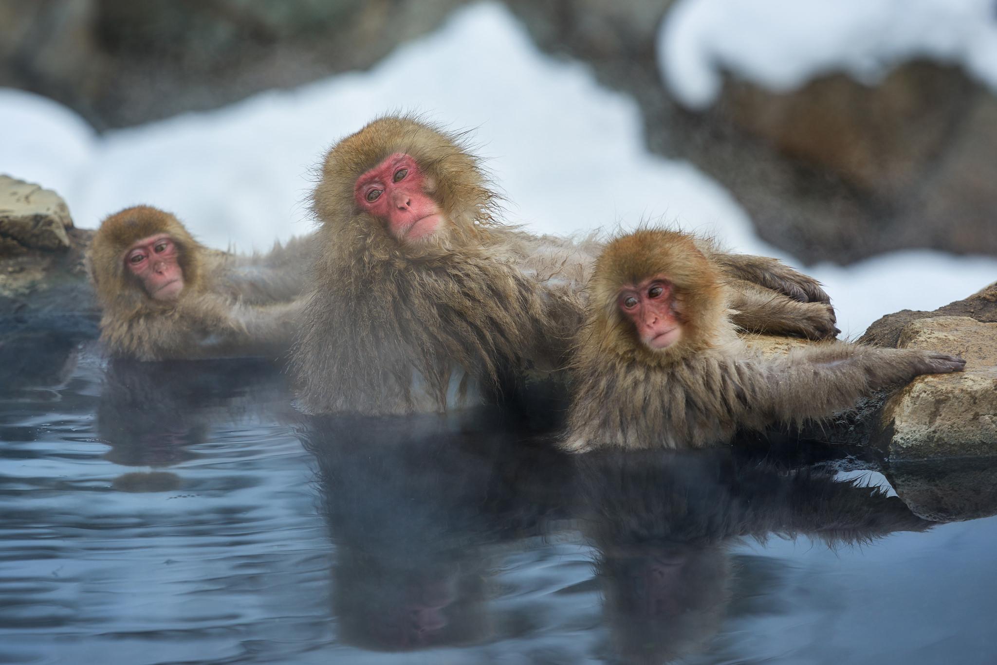 渋温泉snow monkey